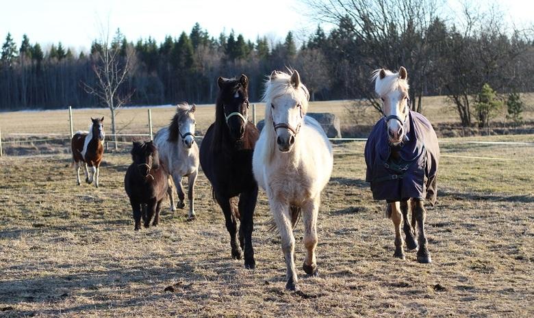 Elysee Stables poneis